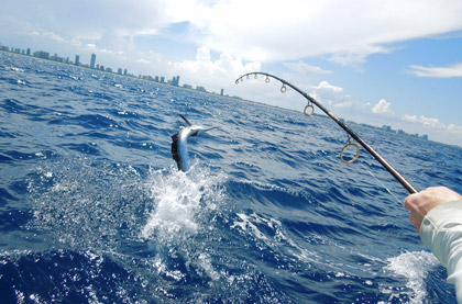 Sailfish Fishing in Miami
